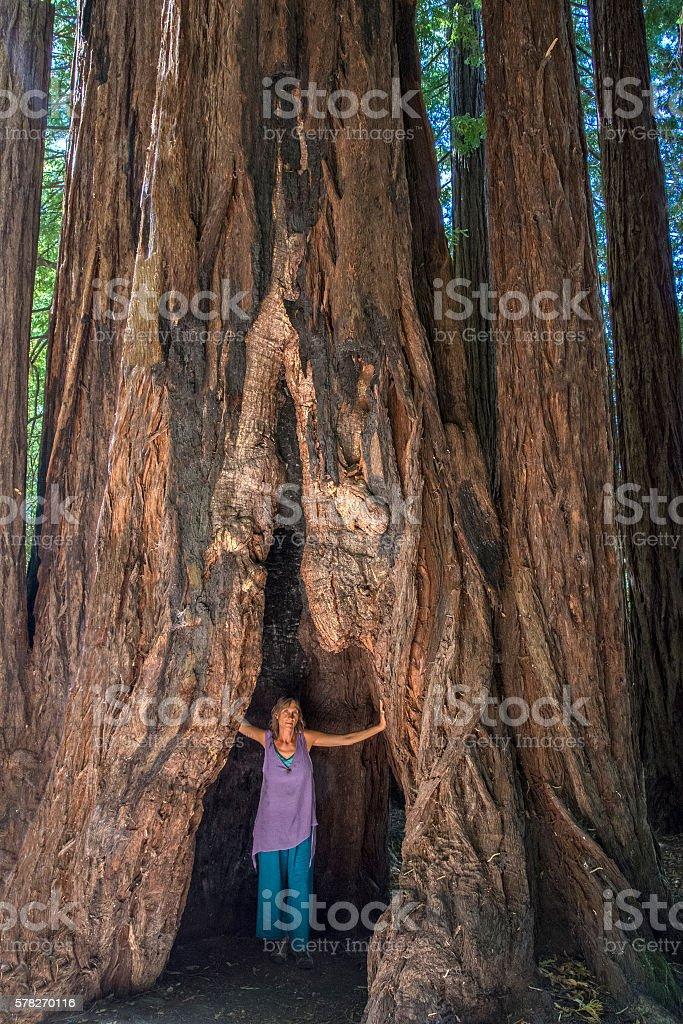Redwood beauty stock photo