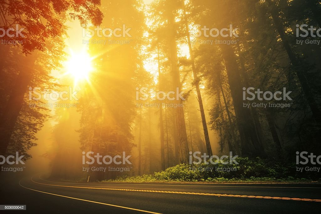 Redwood Foggy Sunset stock photo