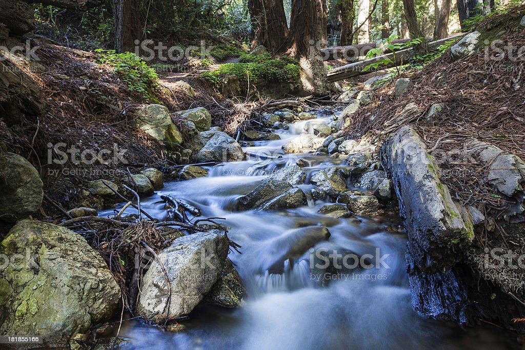 Redwood Forest and Stream royalty-free stock photo