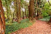 Redwood Forest Golden Gate Park, San Francisco