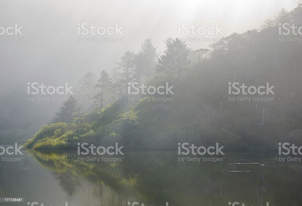 redwood forest in fog next to a lake stock photo