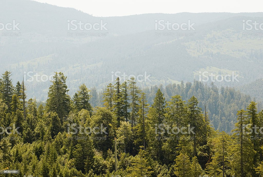 Redwood forest on hills stock photo