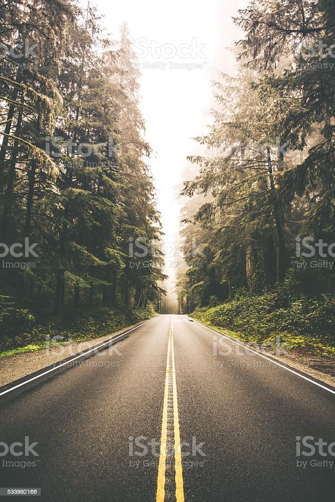 Redwood Forest Road Trip stock photo