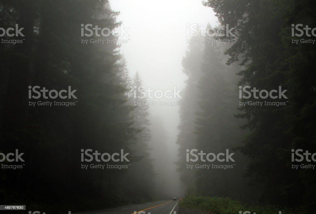 Redwood Highway stock photo