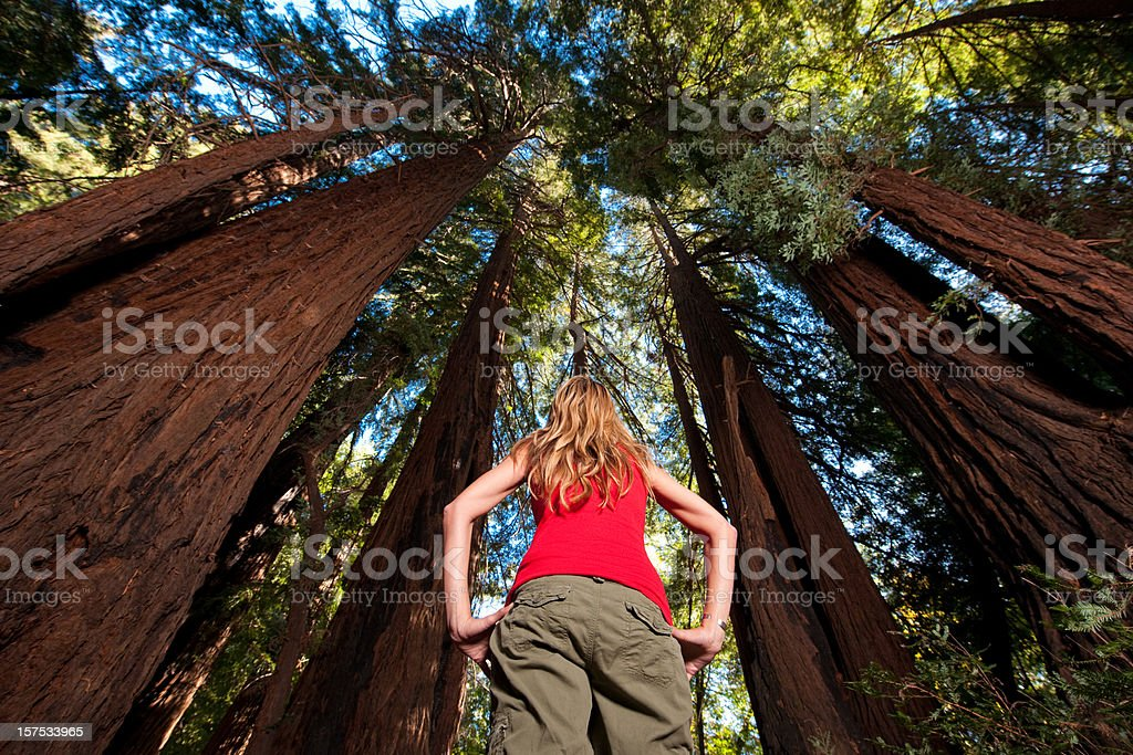 Redwood Hiking stock photo