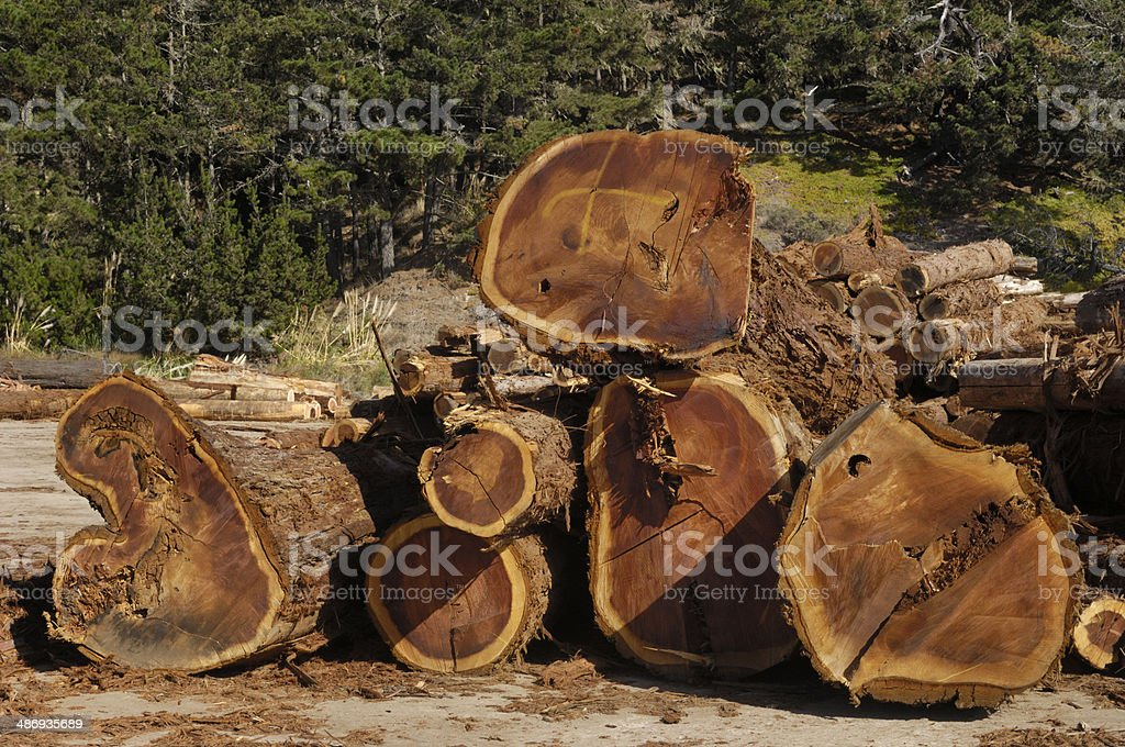 Redwood Logs Stacked For Milling stock photo