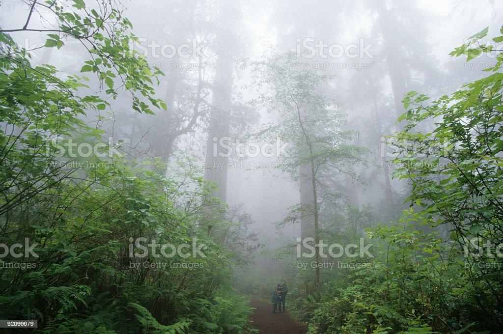 Redwood Mist royalty-free stock photo
