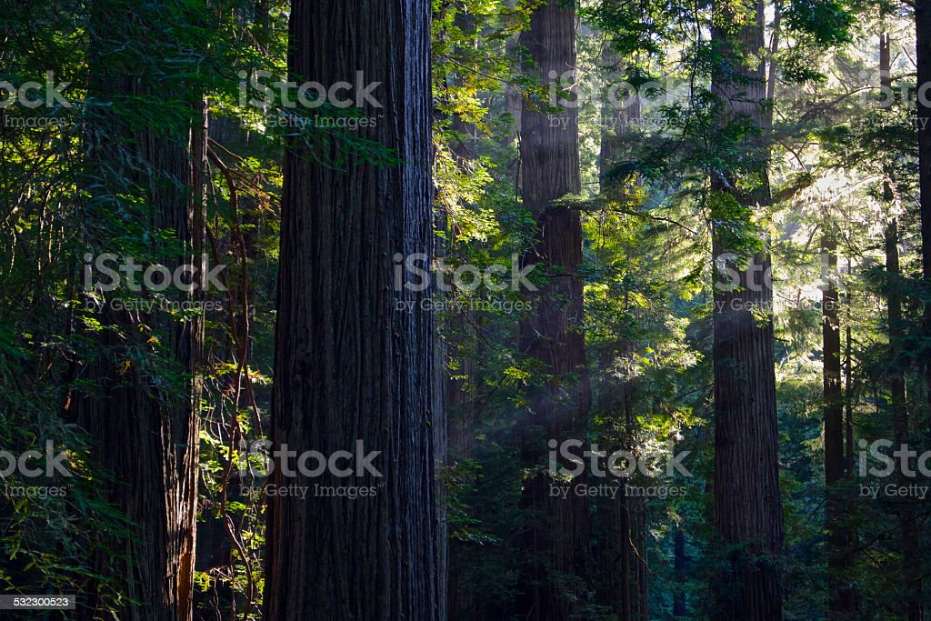Redwood NP Sunset stock photo
