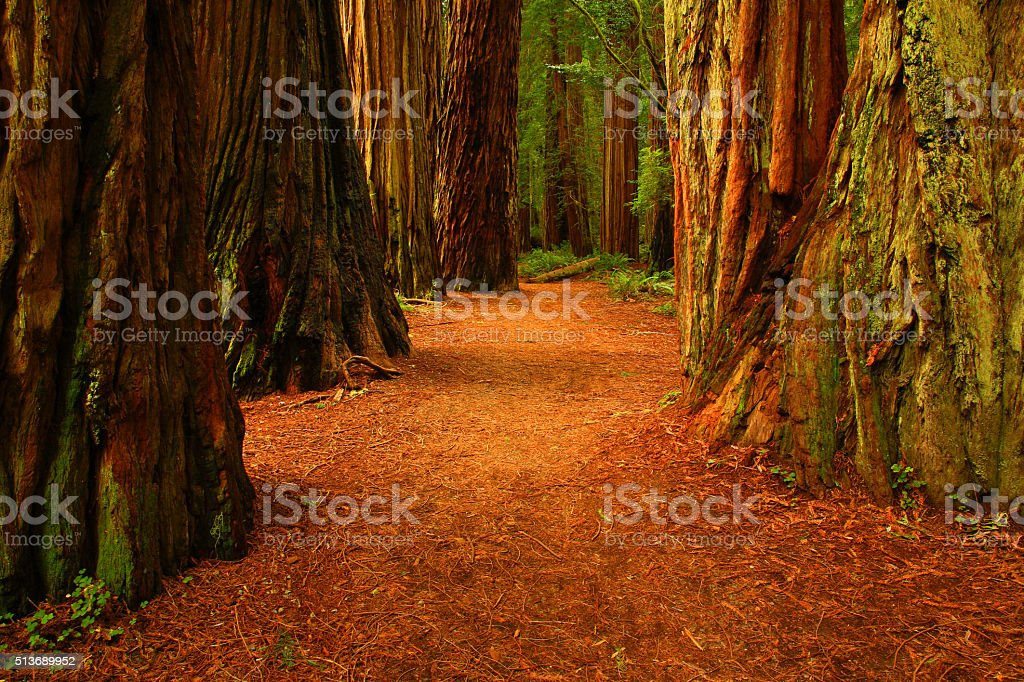 Redwood Trees, Stout Grove, Jedediah Smith Redwoods State Park,California stock photo