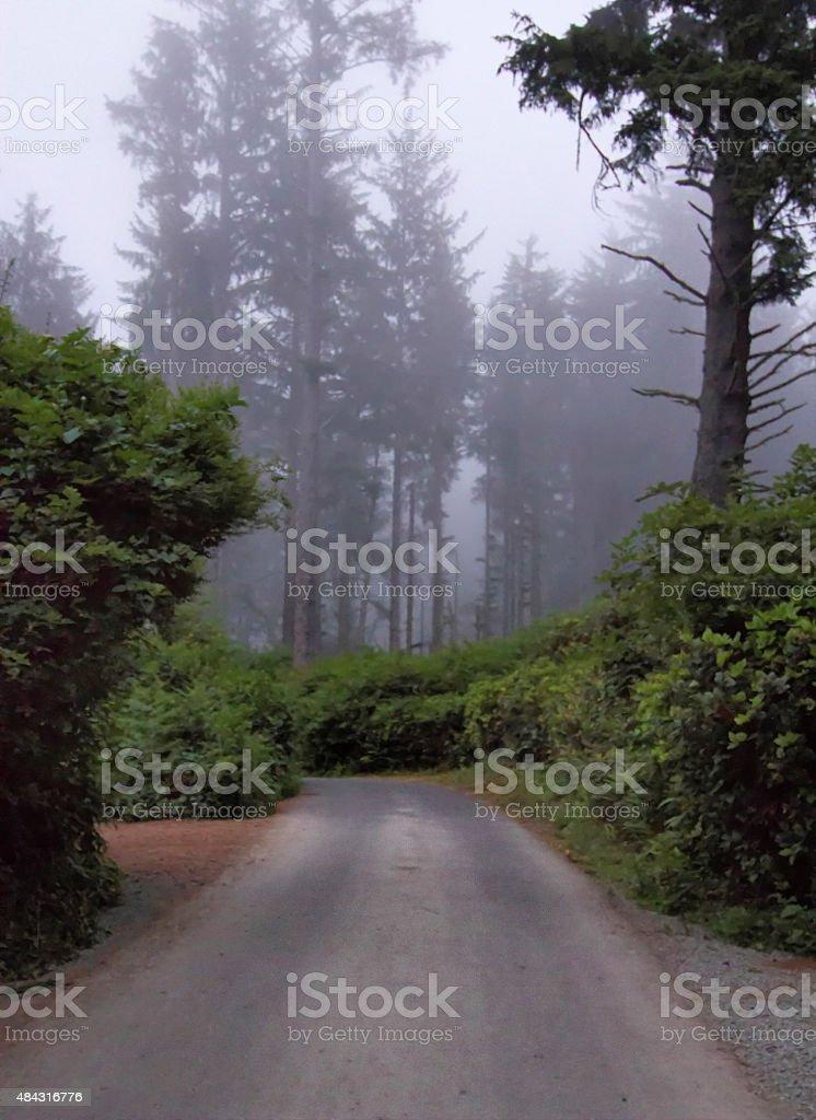 Redwoods Fog. stock photo