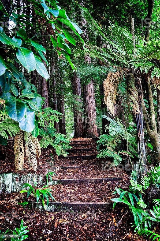 Redwoods forest in Hamurana Springs, New Zealand stock photo