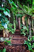 Redwoods forest in Hamurana Springs, New Zealand