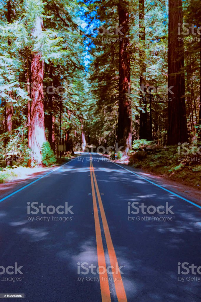 Redwood's highway. stock photo