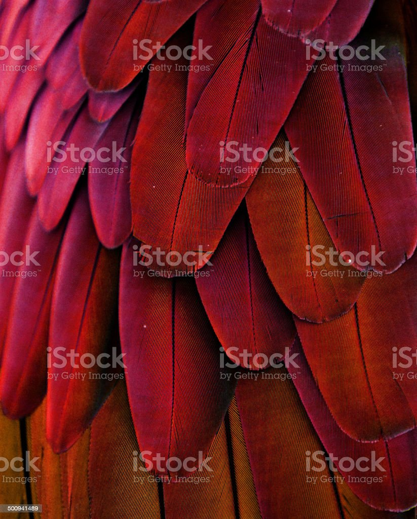 Red/Yellow Feathers stock photo