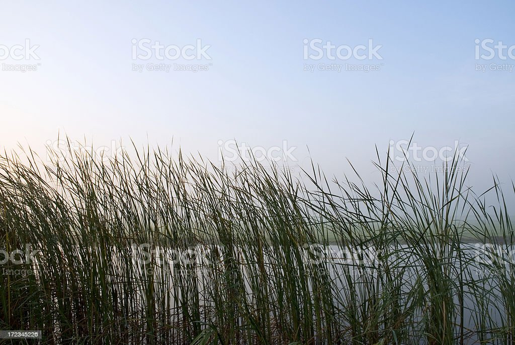 Reed and Sky royalty-free stock photo