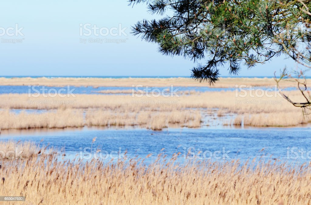 reed and water landscape of Darsser Ort at Baltic sea beach (Darss peninsula - Mecklenburg-Vorpommern) stock photo