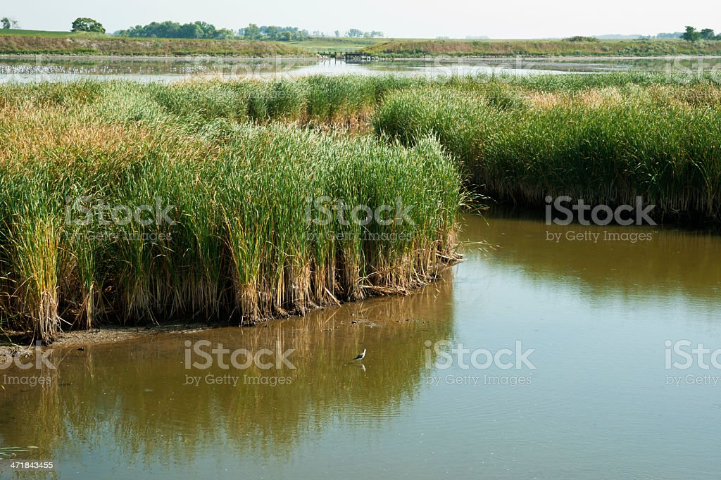 Reed Bed and Marsh Conservation Area royalty-free stock photo
