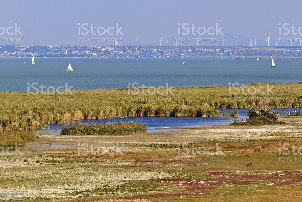 Reed Belt Landscape in National Park stock photo