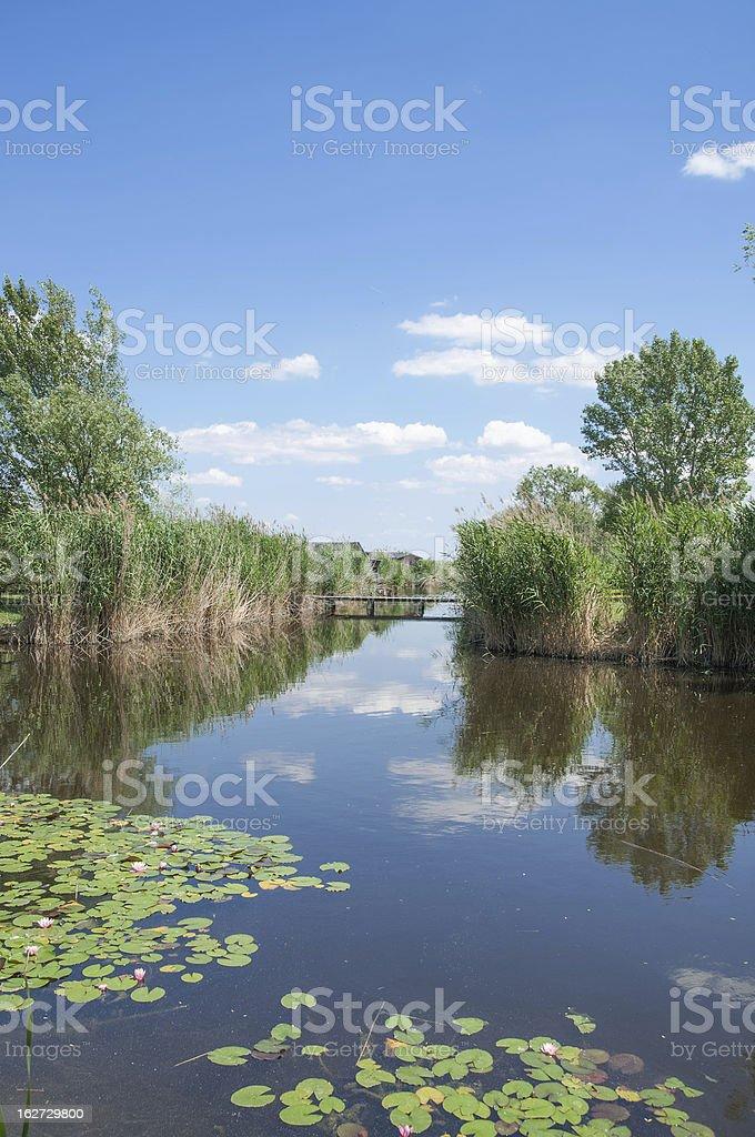 Reed Belt,Lake Neusiedler See,Austria stock photo