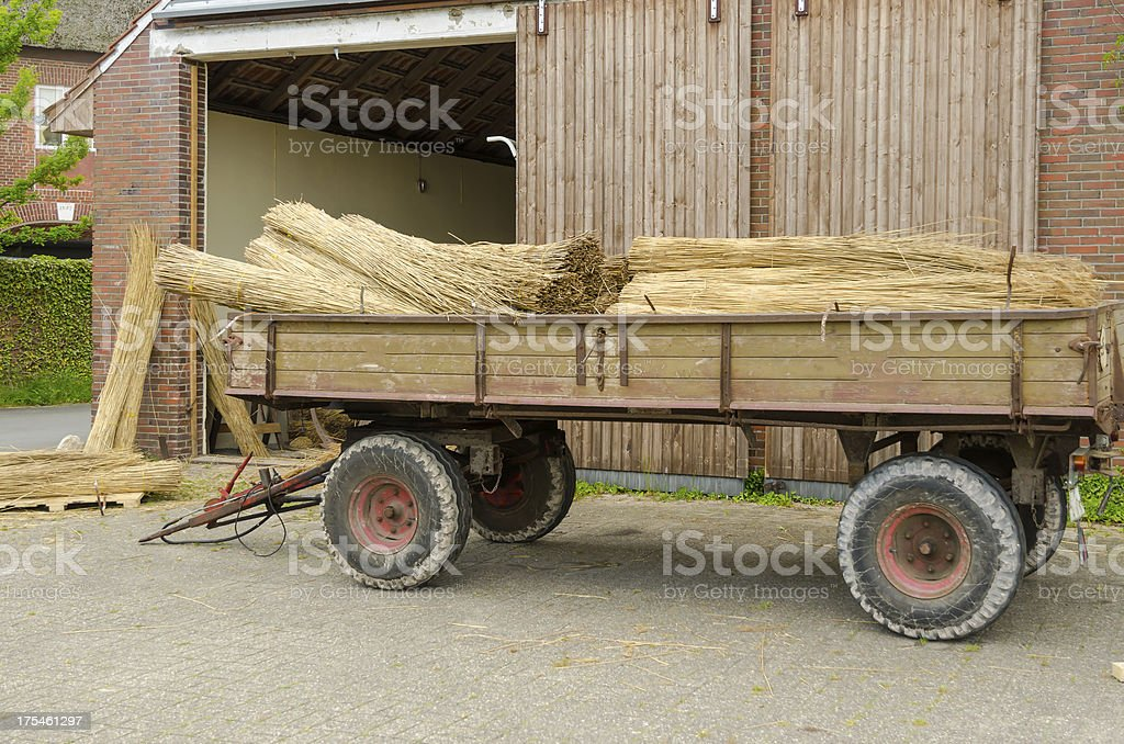 Reed cutter stock photo