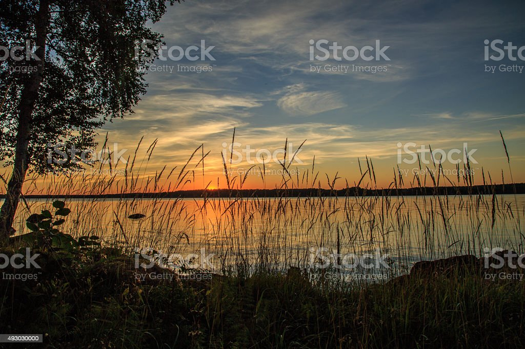 reed in foreground sunset in background stock photo