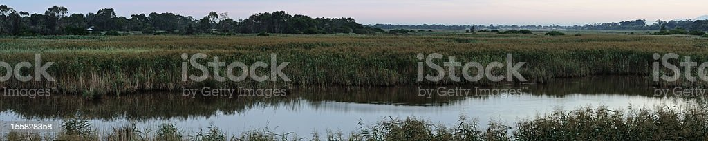 Reed panorama at swamp stock photo