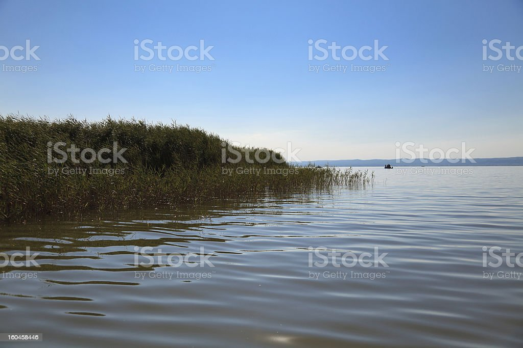 Reed water stock photo