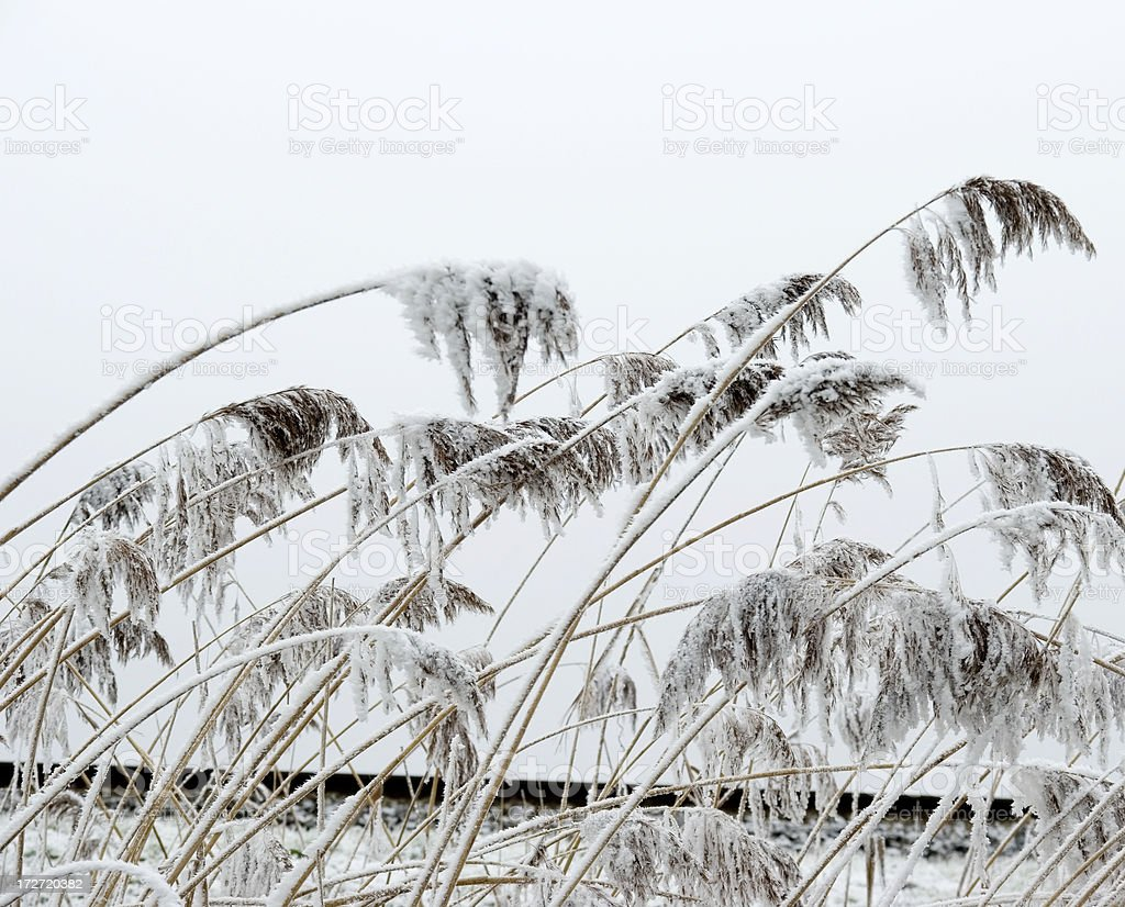 Reed with White Frost along a Railroad stock photo