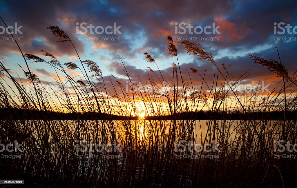 Reeds And Lake At Sunset stock photo