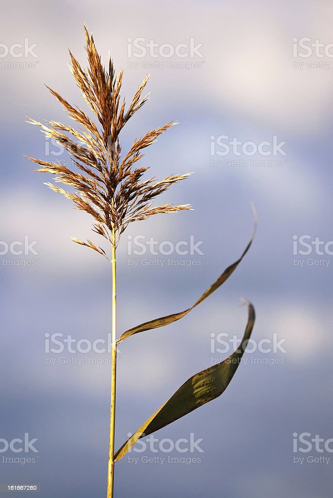 Reeds and leaves against sky with clouds stock photo