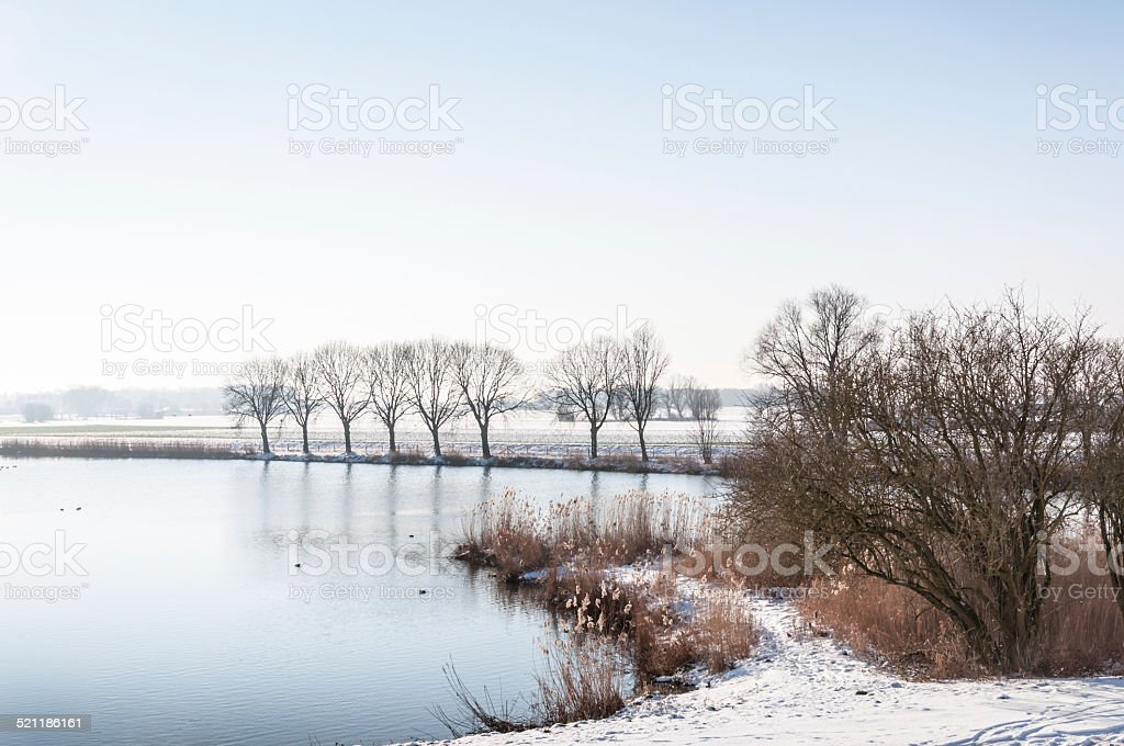 Reeds and trees around a natural pond in winter stock photo