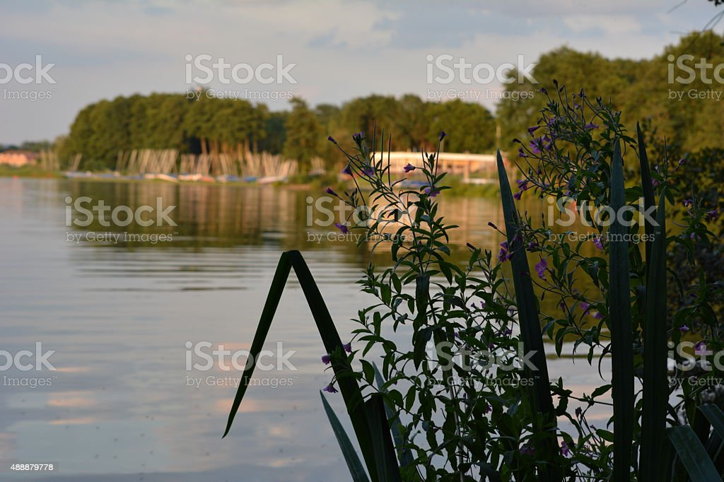Reeds By A Lake stock photo