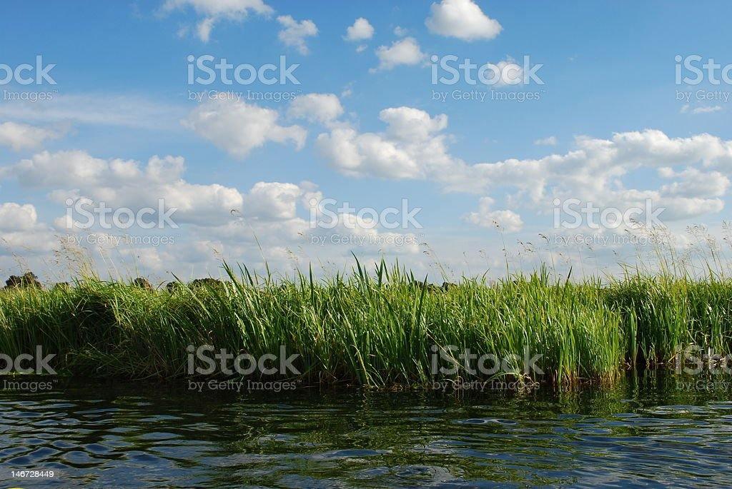 Reeds by the Krutynia river stock photo