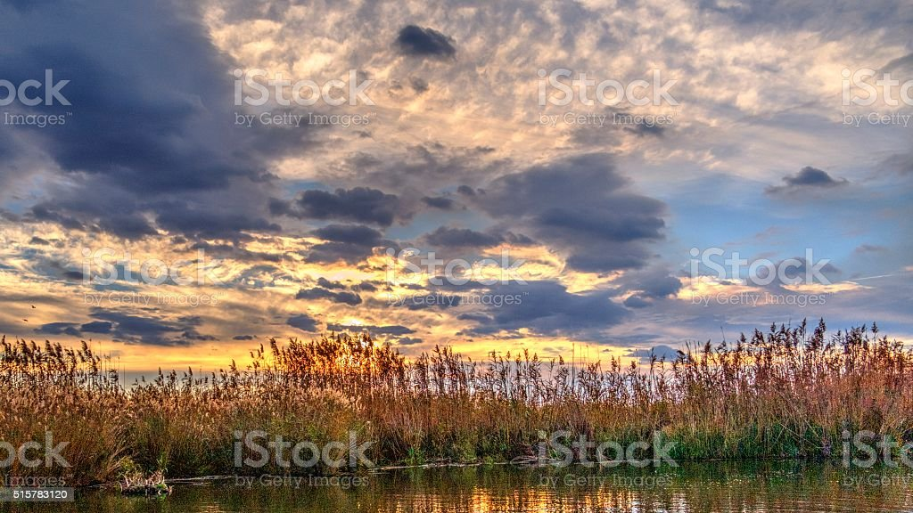 Reeds Growing In The Danube Delta - HDR Image stock photo