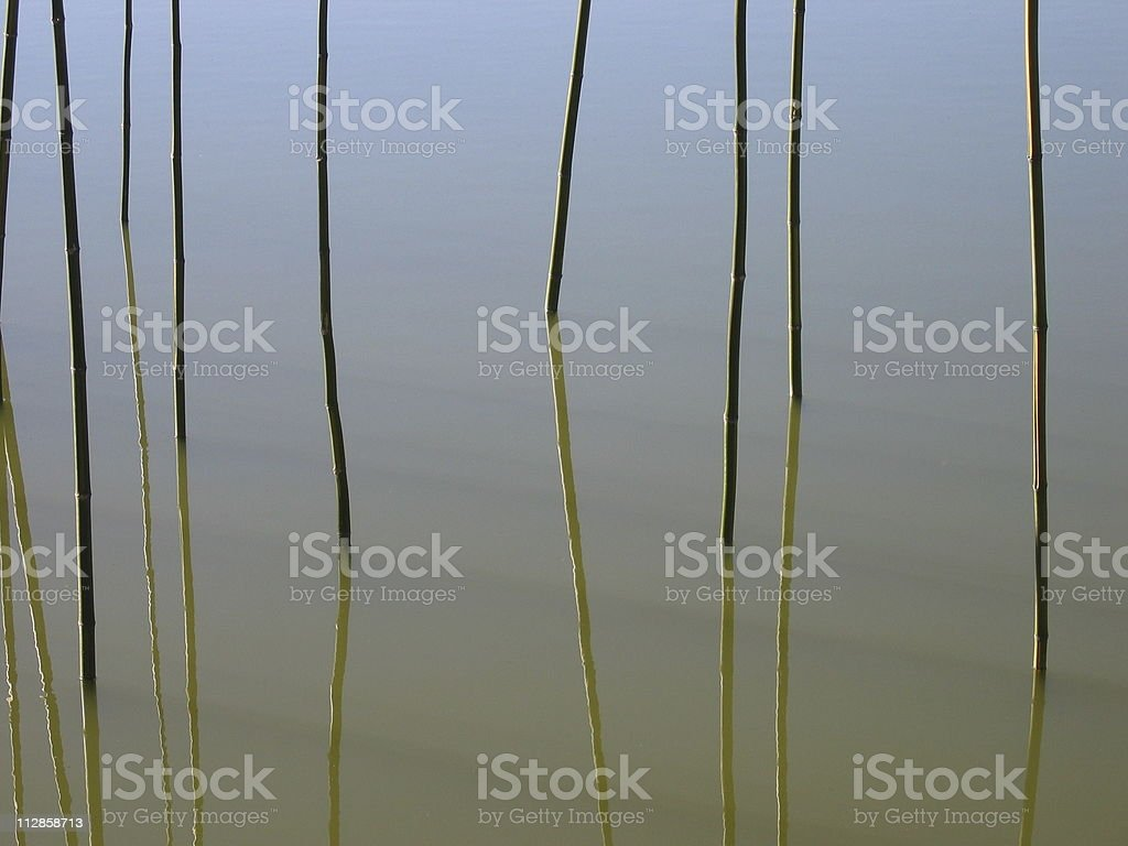 Reeds in a Pond royalty-free stock photo