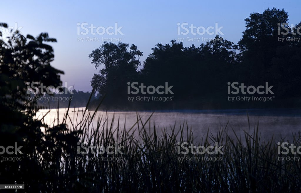 reeds in the morning royalty-free stock photo