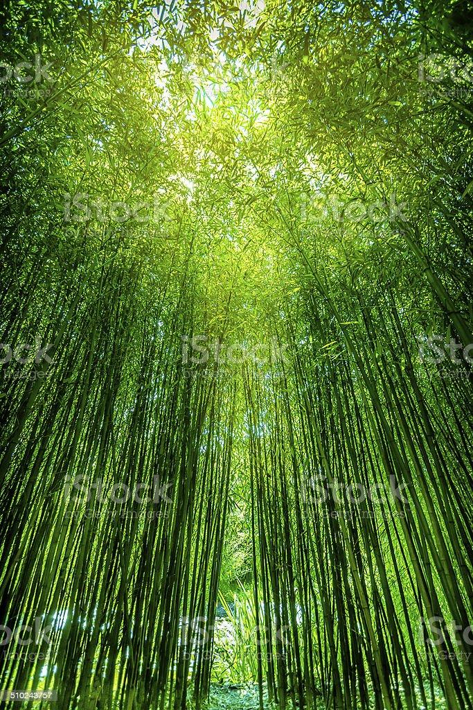 reeds on sun stock photo