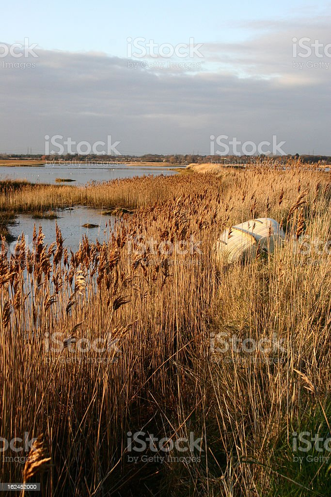 Reeds on the banks of the River Alde at Iken, Suffolk royalty-free stock photo