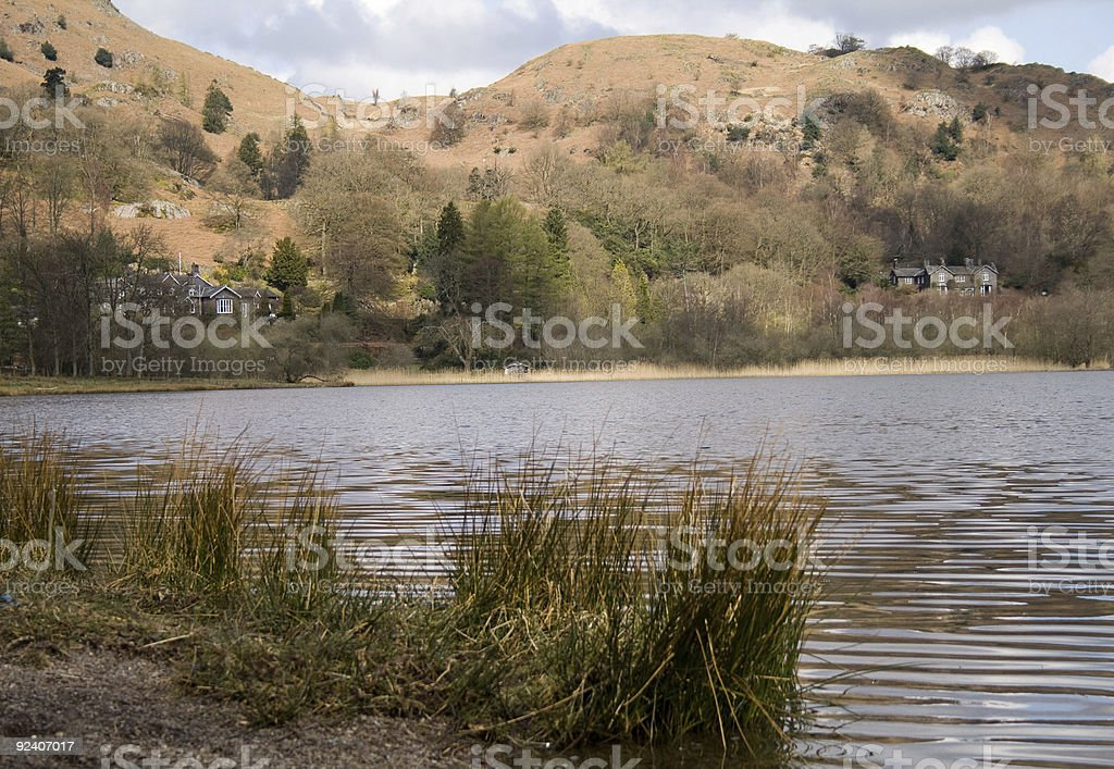 Reeds on the edge of Lake Grasmere stock photo