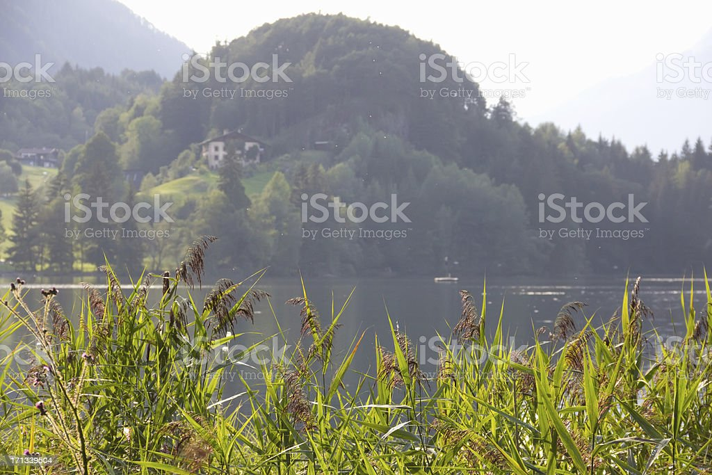 reeds on the lake in Tyrolean Alps stock photo