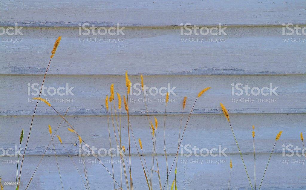 Reeds on Wood stock photo