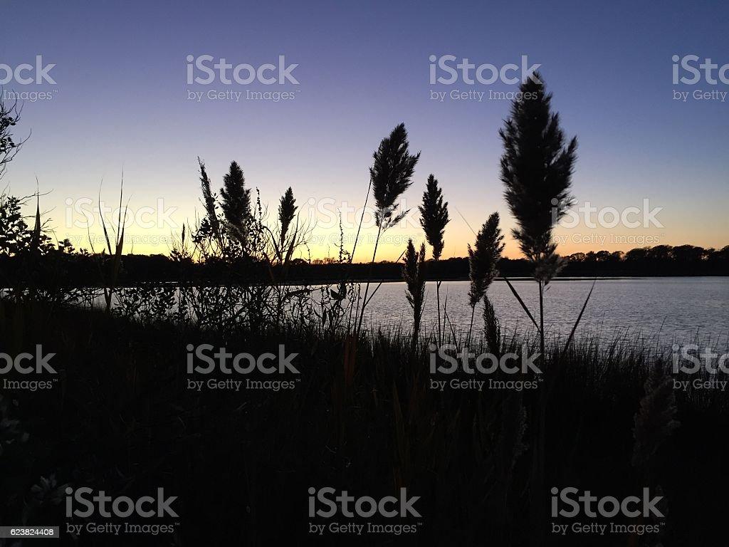 reeds stock photo