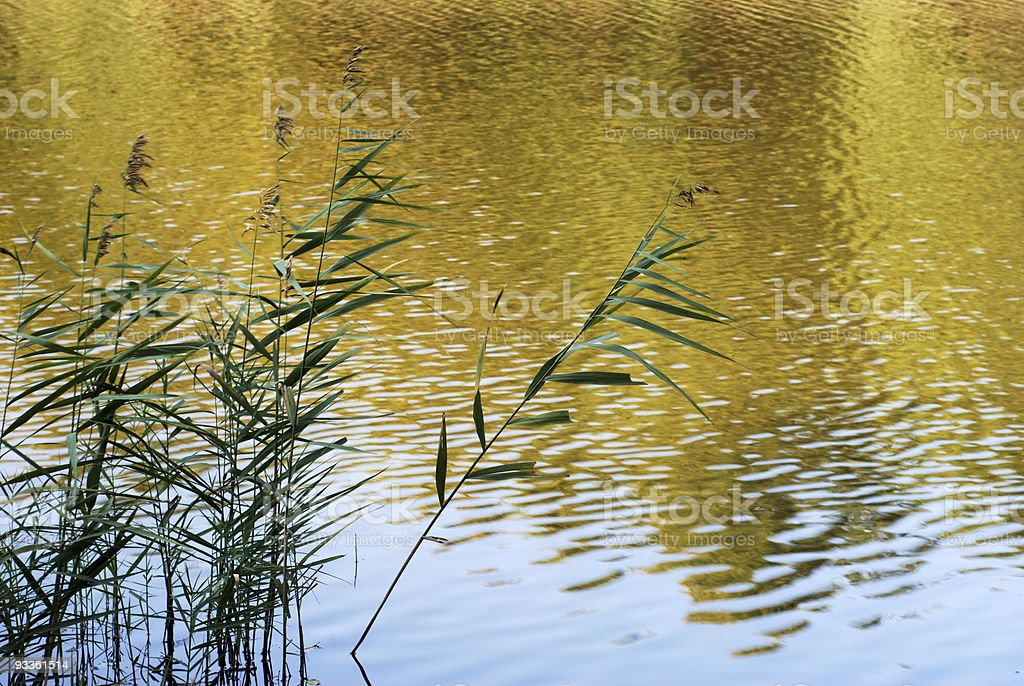 Reeds silhouette royalty-free stock photo