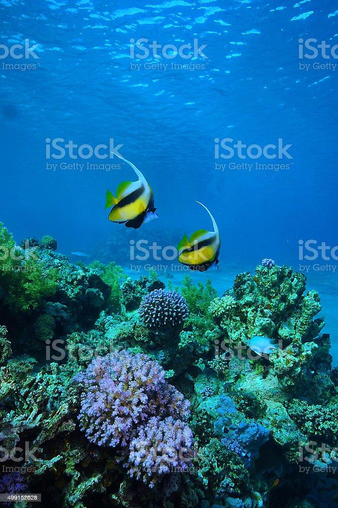 reef 2 stock photo