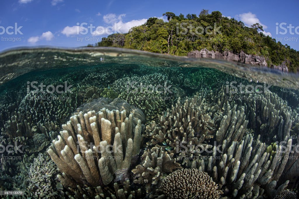 Reef and Limestone Island in Raja Ampat stock photo