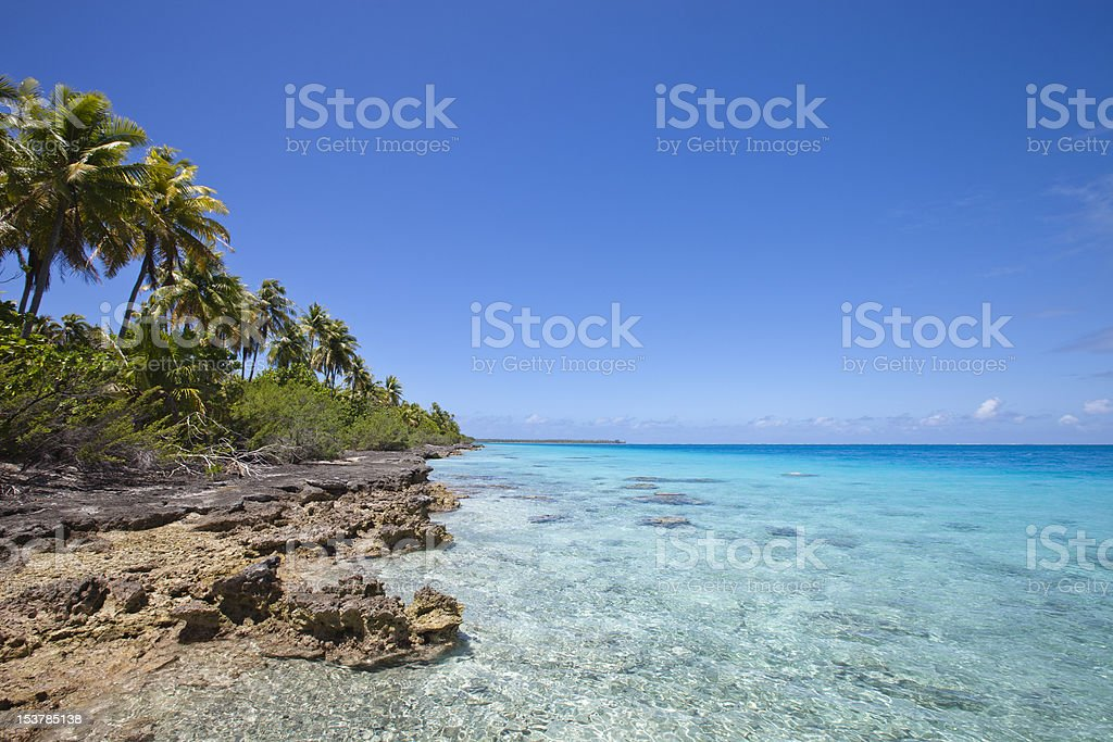 Reef and palm tree on blue lagoon stock photo