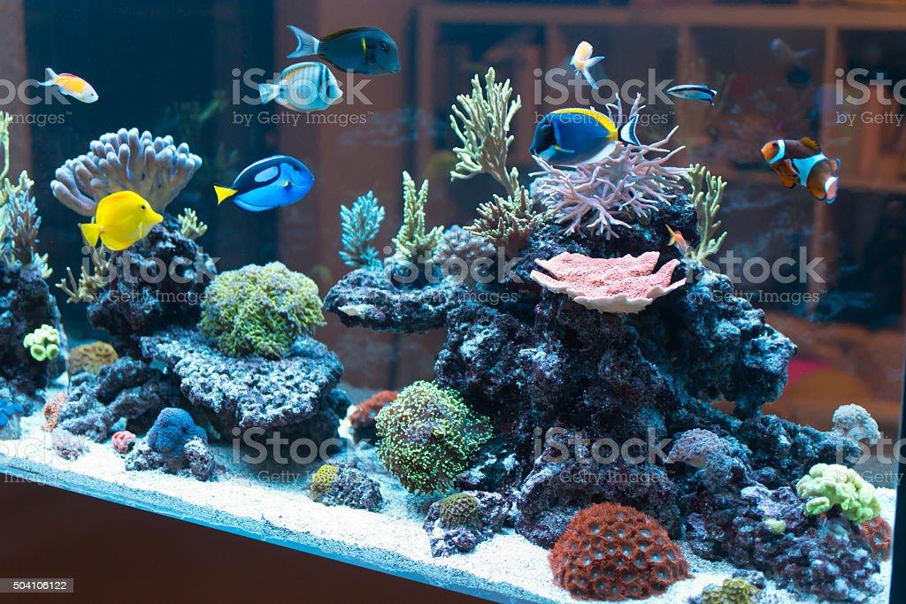 Reef aquarium stock photo