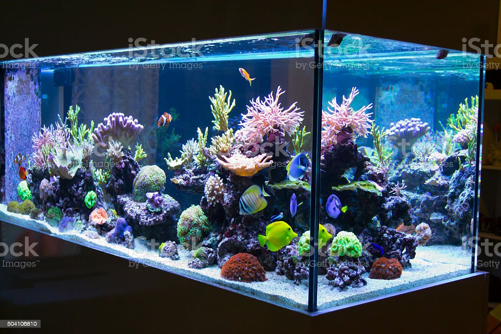 Reef aquarium stock photo