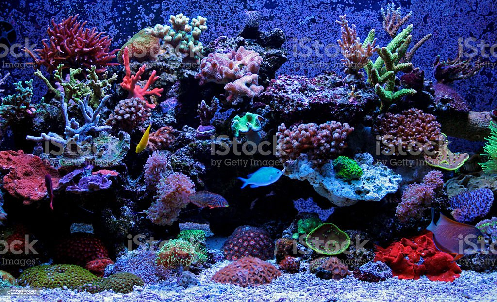 Reef aquarium scene stock photo