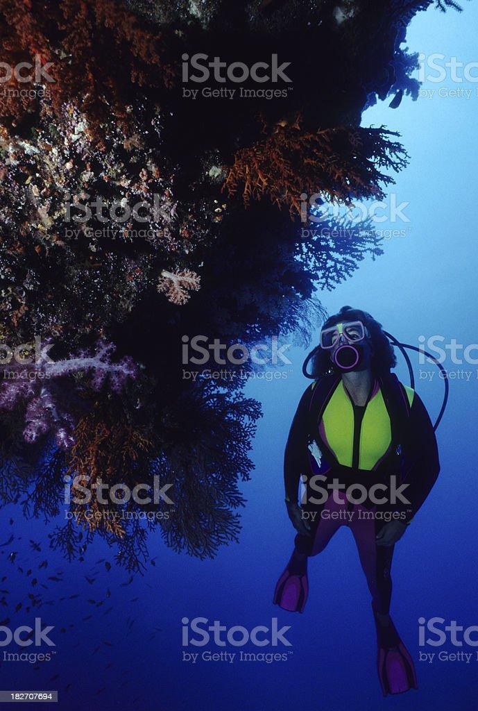 Reef Explorer royalty-free stock photo